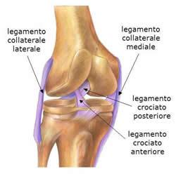 legamenti_ginocchio